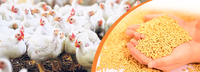 How to start poultry feed production business-Starting a Poultry Feed Mill